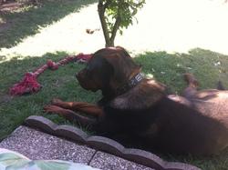 Butch, chien