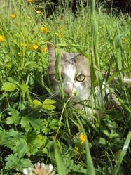 Buzhug, chat Gouttière