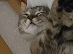 Câline, chaton