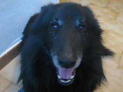 Virgil, chien