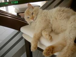 Beija, chat Gouttière