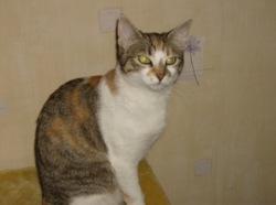 Dacota, chat Gouttière