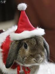 Merry Christmas, rongeur Lapin