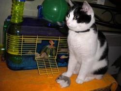 Shyfon, chat Gouttière