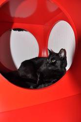 Yoko, chat Gouttière
