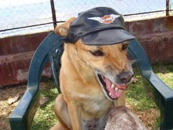 Tiare, chien