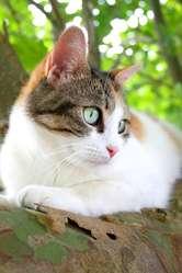 Noisette, chat Gouttière