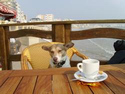 Leo, chien Jack Russell Terrier