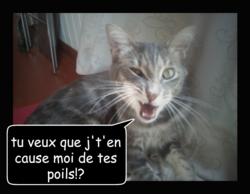 Filou, chat