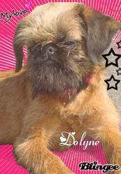 Dolyne, chien Griffon bruxellois