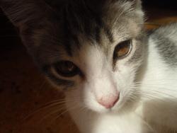 Lucky, chat Gouttière