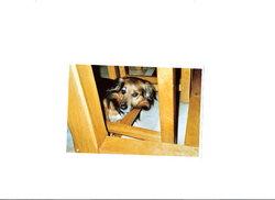 Ukapi, chien