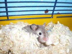 Graffitti, rongeur Hamster
