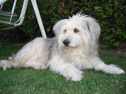 Tara, chien