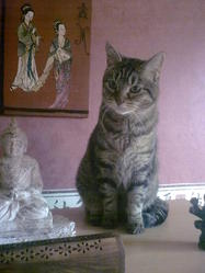 Titeuf, chat Européen