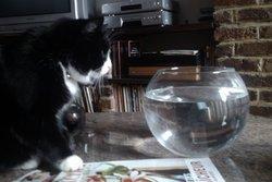 Chat , chat Gouttière