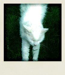 Ploum, chat