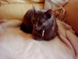 Sedna Deceder Le 10 05 2014, chat Gouttière