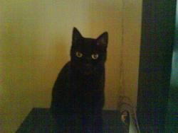 Tounie, chat Gouttière