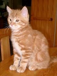 Calin, chat Gouttière
