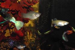 Mon Aquarium, autres