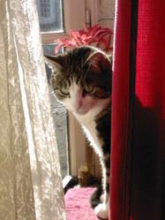 Kalinou, chat Gouttière