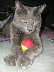 Ugo, chat Gouttière