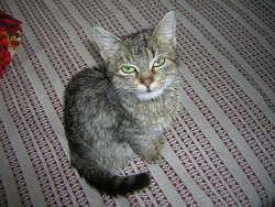 Elza, chat Gouttière