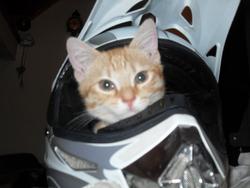 Cacahuéte, chat Gouttière