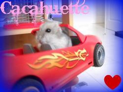 Cacahuette Au Paradis, rongeur Hamster