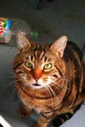 Cacawette, chat Gouttière