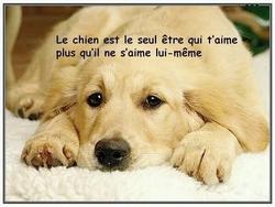Cachou, chien