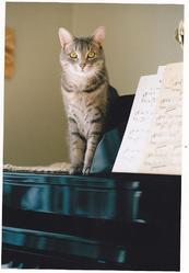 Cachou, chat Gouttière