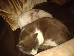 Cacoune  Et Crocro, chat