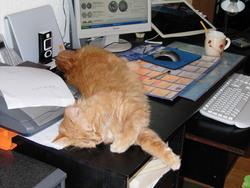 Cesar, chat Gouttière