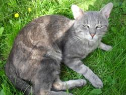 Caid, chat Gouttière