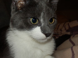 Caius, chat Gouttière