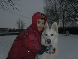 Calice, chien Berger blanc suisse