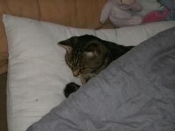Caliméro, chat Gouttière