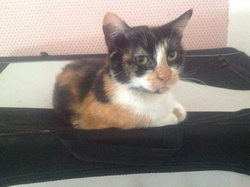 Câlina , chat Gouttière