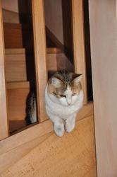 Câline, chat Gouttière