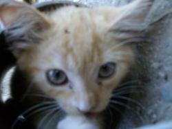 Caline, chat Gouttière