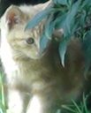 Farrugia, chat