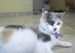 Caline, chat