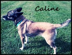 Caline, chien
