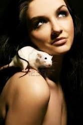 Caline, rongeur Rat