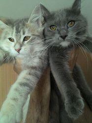 Caline Et Jessy, chat Gouttière