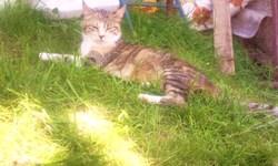 Calinette, chat Gouttière