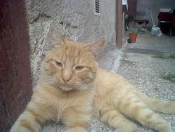 Calinou, chat