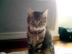 Calinou, chat Gouttière